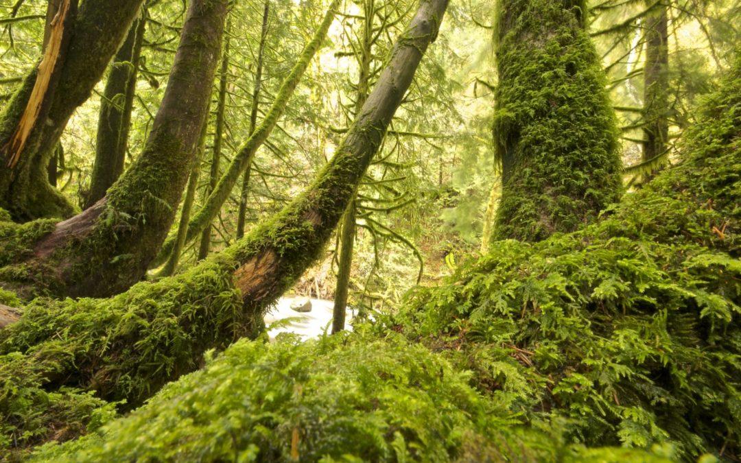 Naturschutzrecht / Neubestellung des Naturschutzbeirates im Landratsamt Lindau