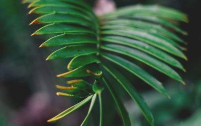 Waldnachwuchs im Blick – Es geht um Wälder der Zukunft – Kaniber gibt Startschuss für landesweite Erhebung