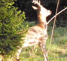 Wild als Lebensraumgestalter